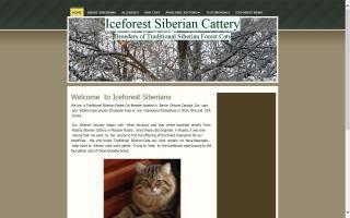 Iceforest Siberians