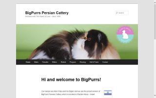 BigPurrs Persians