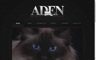 Aden Ragdoll Cats Breeder