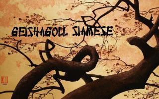 Geishagoll Siamese