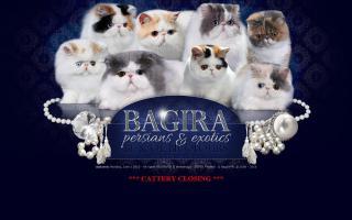 Bagira Persians & Exotics