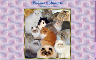 Ahmischi Persians & Himalayans