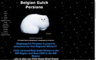 Belgian Gulch Persians