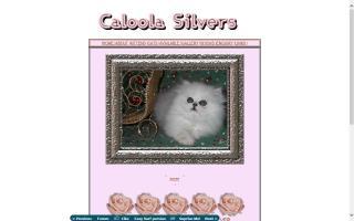 Caloola Silvers