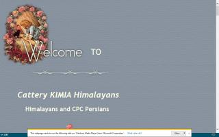 Cattery KIMIA Himalayans