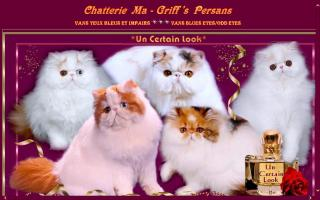 Ma Griff's Persans