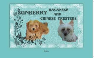 Sunberry Cattery