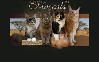 Maccala Maine Coons