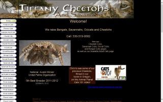 Tiffany Cheetohs