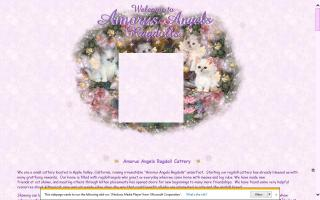 Amorus Angels Ragdoll Cattery