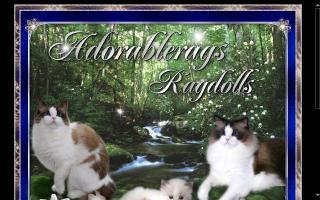 Ragdoll Cat Breeders Directory - O Kitty!