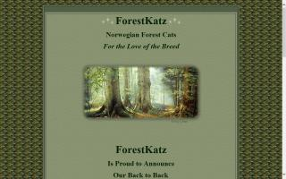 Forestkatz Norwegian Forest Cats