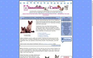 Innocentia Cattery