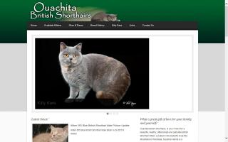 Ouachita British Shorthairs