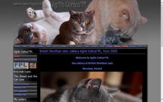 Agilis Cattus*Pl