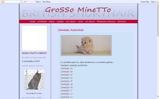 GroSSo MineTTo British Shorthair